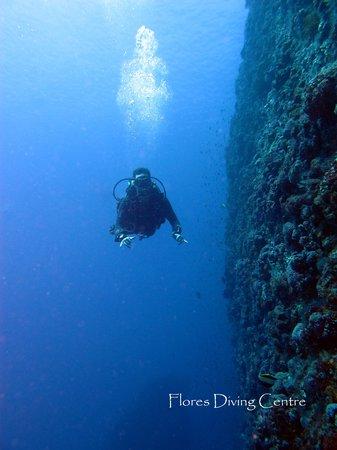 Flores Diving Centre