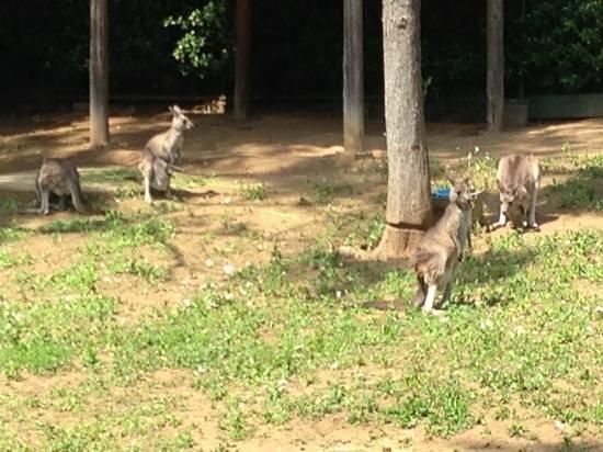 Chiba Zoological Park: Adicionar uma legenda