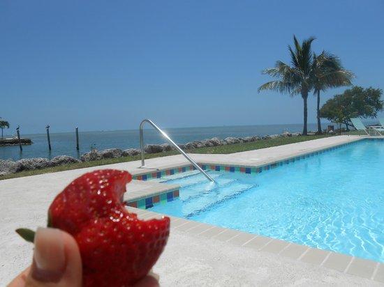 Seascape Motel and Marina : Underbar utsikt vid poolen