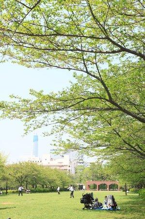 猿江恩賜公園, 若葉のころ