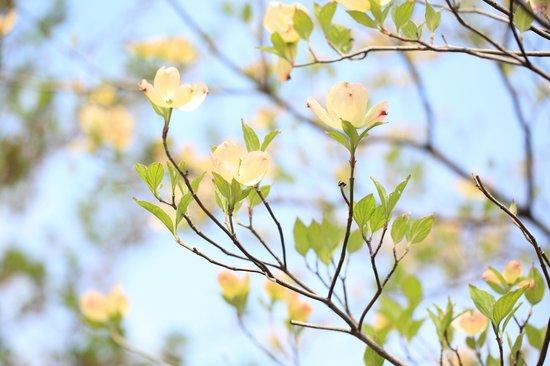 猿江恩賜公園, ハナミズキが美しい