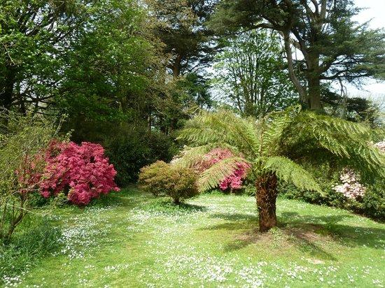 Trewidden Garden: Azealias
