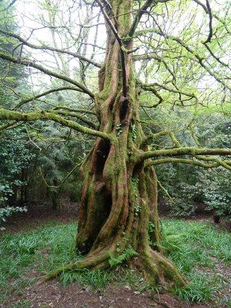 Trewidden Garden: Many Rare Trees