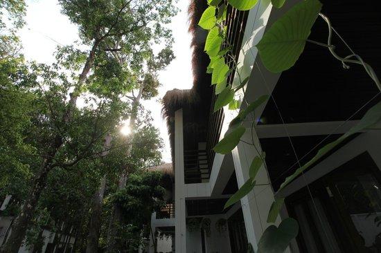 Natura Resort: Building