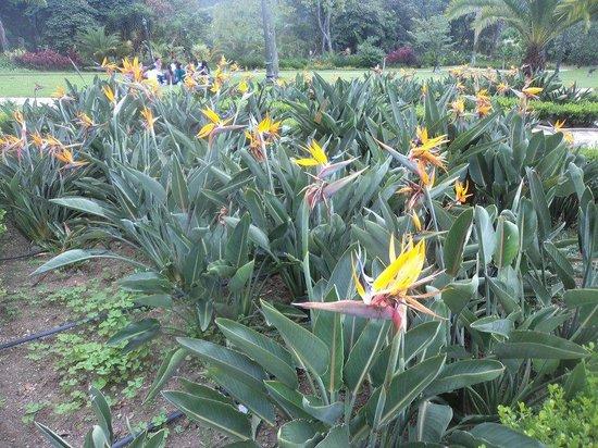 el castillo museo y jardines aves del paraiso