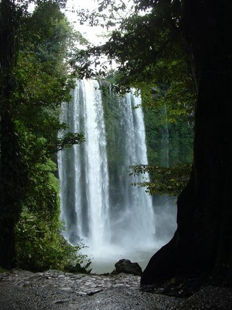 Cascadas de Misol-Ha: View of the top of the waterfall from the front