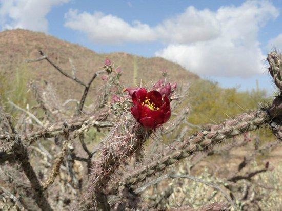 Tucson Mountain Park: Bloom among the thorns