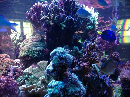 Hotel de la Corniche : Fish tank in dining room