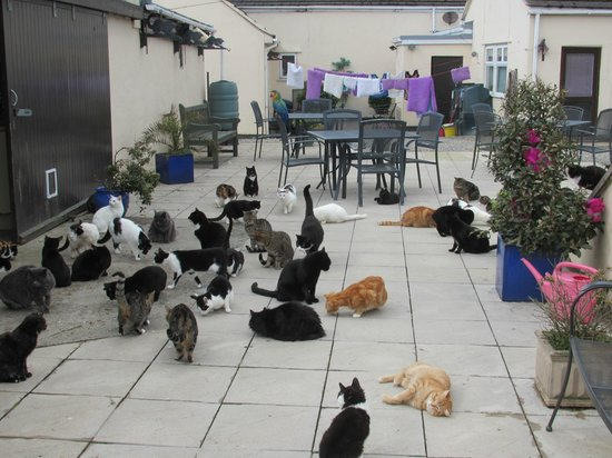 Santon, UK: Mann Cat Sanctuary