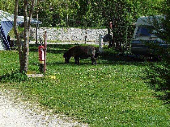 Camping la Ferme de Castellane : La tondeuse.