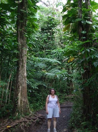 Manoa Falls : jungle très dense