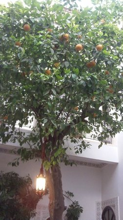 Riad Aguerzame: Les orangers du Patio du Riad