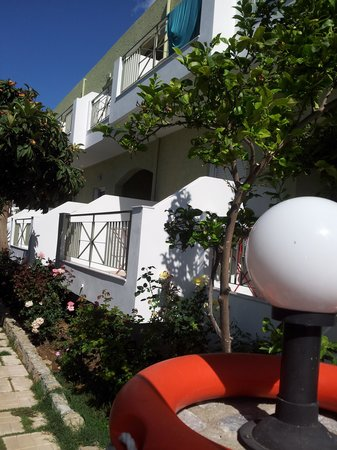 Manolis Apartments : The lemon tree and our balcony