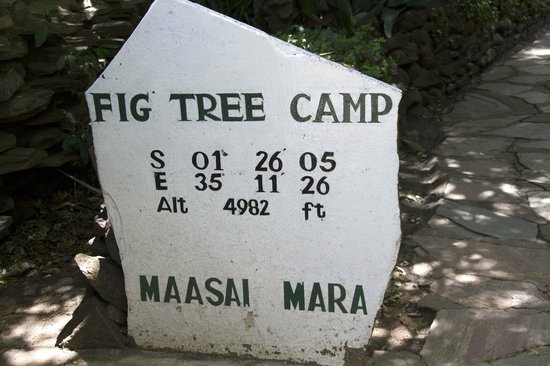 Fig Tree Camp: Fig Tree Camp