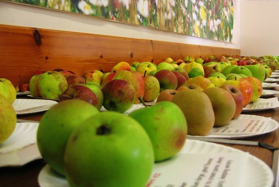 Harestanes Countryside Visitor Centre: Over 200 apple varieties at Harestanes Apple Day event.