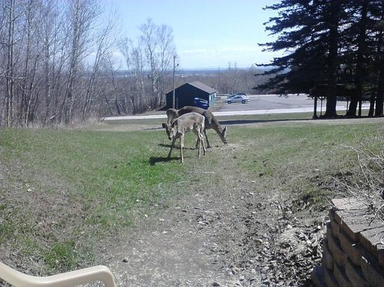 Allyndale Motel: Feeding the deer outside my room!