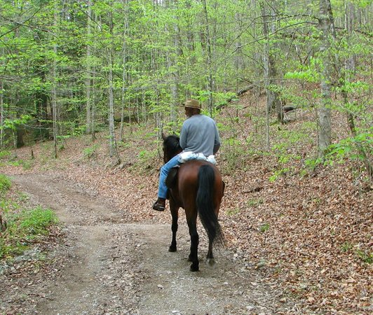 Big South Fork National River & Recreation Area: Gorgeous Trails!