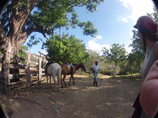 Da Flying Frog Canopy Tours : Getting the Horses for a Ride