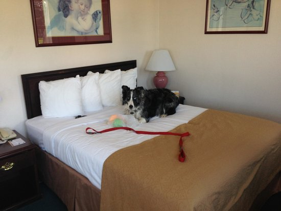 Quality Inn Uptown: Rudy approved!
