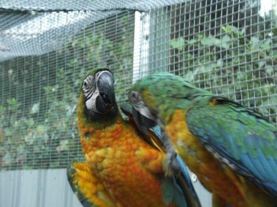 Bird Gardens of Naples: mork & mindy