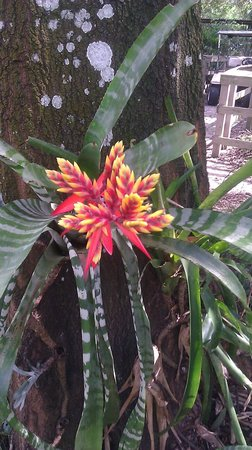 Bird Gardens of Naples: air fern
