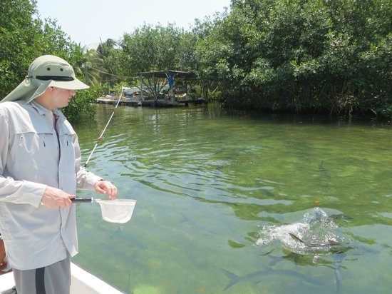 Barefoot Fisherman Expeditions: Feeding the tarpons