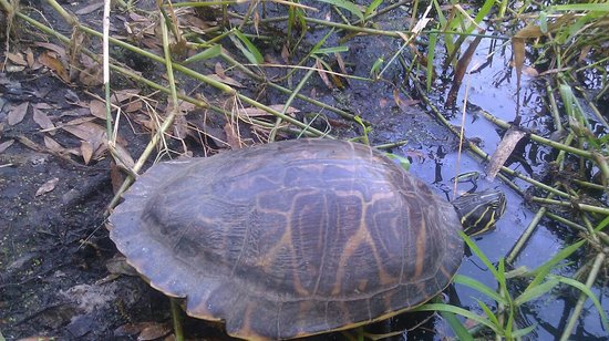 Bird Gardens of Naples: turtle