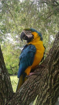 Bird Gardens of Naples: jerry