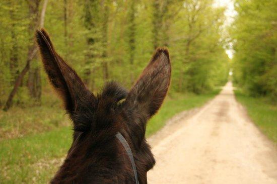 Le Monde d'Ossyane : Les oreilles Berthe