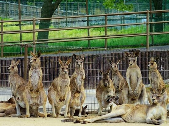 Green Park : 100匹のカンガルーとふれあえます