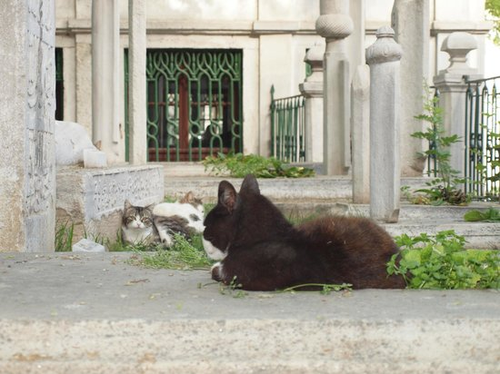 Whirling Dervish Ceremony in Fatih: Cats living in the Dervish Museum grounds