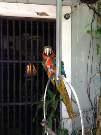 The Gallery Inn: One of several parrots that meets you at the Inn entrance each day