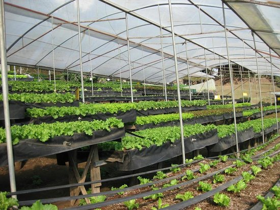 In de groente kas picture of los pinos cabanas y for Capillas de velacion jardin de los pinos