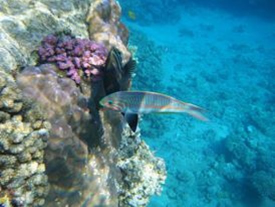 Shark's Bay Beach: Snorkelling Sharks Bay