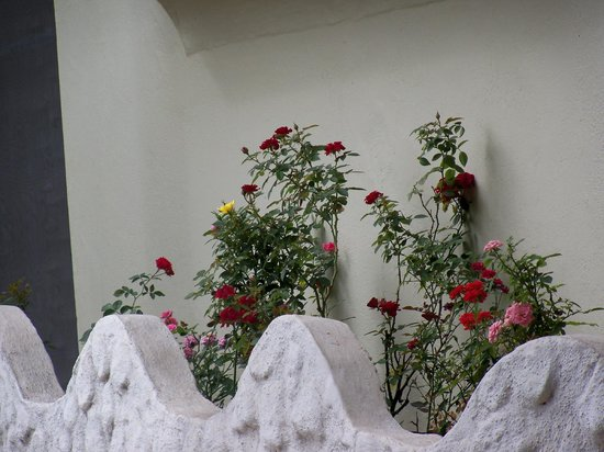 Hospedaje Nathaly: Algunas Rosas de Nathaly