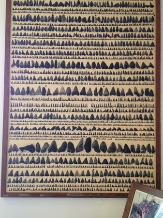 North Carolina Maritime Museum at Southport : sharks teeth collection