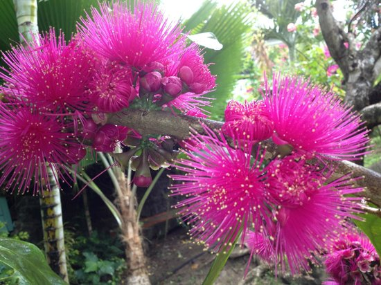 Mango Beach Inn: Flowers on the grounds
