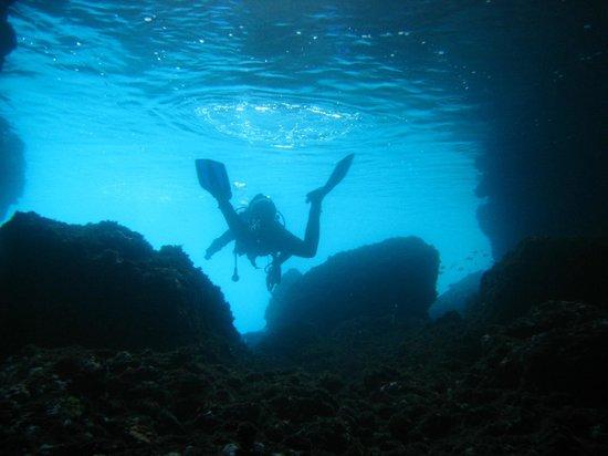 Diving Porto Conte: Floating around