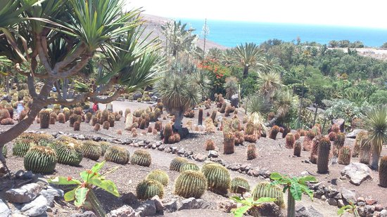 La Lajita Oasis Park, Fuerteventura. - Picture of Oasis Park Fuerteventura, F...