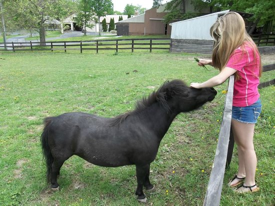 Greenville, VA: fun time petting the shetlin pony