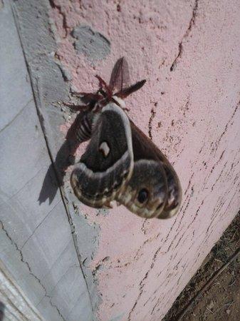 Rio Cucharas Inn : butterfly at the rio inn