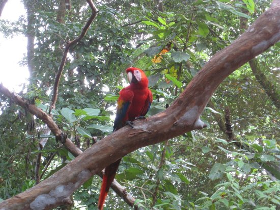 Tiskita Jungle Lodge: Macaw