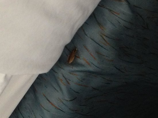 Microtel Inn & Suites by Wyndham Gulf Shores : Bugs
