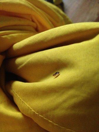Ozi Inn Backpackers: BED BUGS EVERYWHERE!