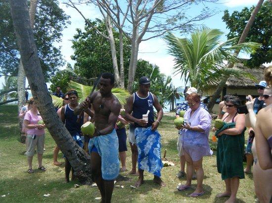 Robinson Crusoe Island: coconuts anyone