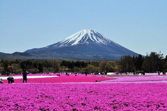 Fujikawaguchiko-machi, Japonya: 富士芝桜まつり