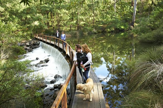 Prevelly, Australien: The Margaret River-dog friendly walks in forest