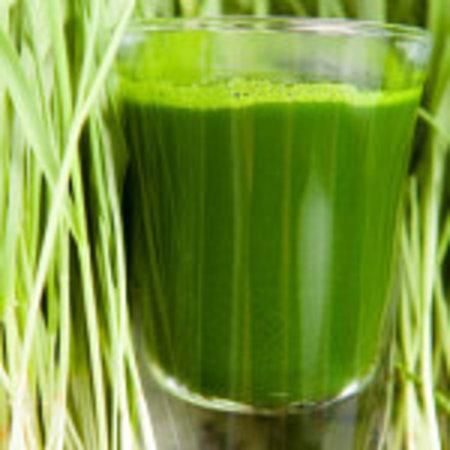Detox Juice Bar: We grow our own WheatGrass