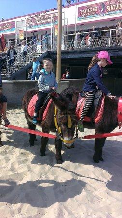 Seashore Holiday Park - Haven: donkeys on the beach