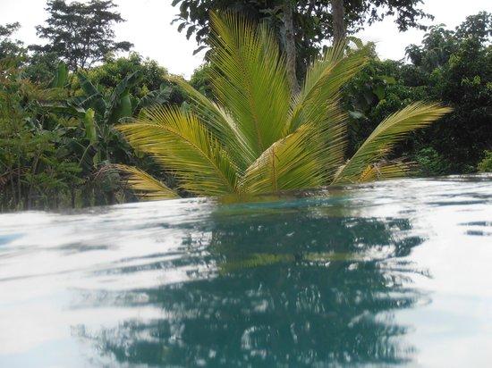 Kalu's Hideaway: piscine